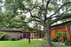7818 NAIRN ST HOUSTON, TX 77074: Photo Backyard is ample for swimming pool, playground and has mature Oak