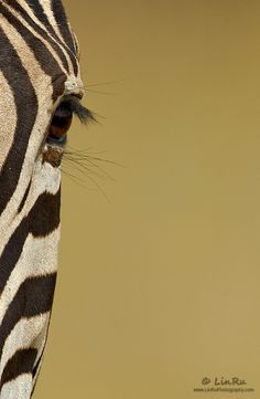 Zebra Abstract by Rudi van den Heever, via 500px