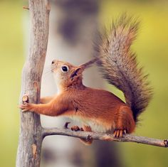 Professional Instagrammer and Travel Photography Interview with Lauren Bath! | The Travel Tart Blog Red Squirrel, Travel News, First World, Travel Photography, Wildlife, Creatures, Images, Ottawa Canada, Instagram Travel