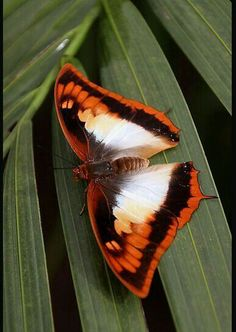 Butterfly - challenge your mind! Types Of Butterflies, Flying Flowers, Flying Insects, Bugs And Insects, Butterfly Effect, Butterfly Kisses, Beautiful Bugs, Beautiful Butterflies, Butterfly Games