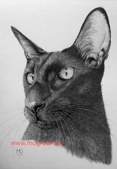 TEKENINGEN VAN MENS EN DIER Art Sketches, Art Drawings, Graphite Drawings, Cats, Animals, Facebook, Blogging, Gatos, Animales