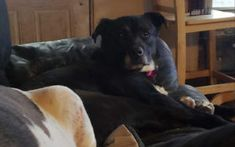 Rescues Can Help More Dogs With Help From Rescue Bank / Cuddling On The Couch, Finding Your Soulmate, Shelter Dogs, Dog Supplies, Happy Dogs, Some Pictures, Dog Treats, Dog Mom, Dog Training