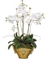 Znalezione obrazy dla zapytania white orchid in golden pot