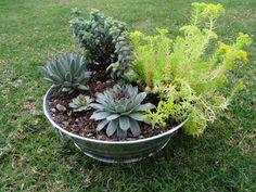 Container Gardening! Succulents