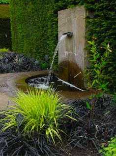 Ophiopogon nigrescens and Hakonechloa macra 'Aureola' at RHS Garden Wisley in Surrey, UK, in 2003. Photo by Karl Gercins. First seen on the blog Serenity in the Garden.
