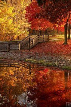 Fall, beautiful fall!
