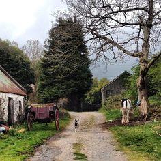 Horse Farm in Killarney, Ireland