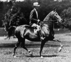 Morgan horse Rhyme and Earl Krantz.  The Morgan origins are from Justin Morgan and his horse Figure.