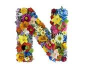 Stock Photograph of Flower Alphabet - O k1272649 - Search Stock Photography, Posters, Pictures, and Photo Clipart Images - k1272649.jpg