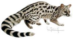 gineta Magical Forest, Spirit Animal, Kawaii, Animals Beautiful, Illustration, Google Search, Pets, Gatos, Paintings