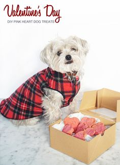 These look fabulous! Love that the color comes from beets. #valentinedog #lovemydog #dogtreat
