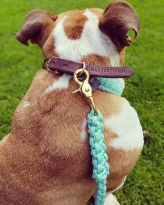 Die Leder Nuance Dog Leash in Aqua Türkis von Molly&Stitch ist bei Dogaholics GmbH erhältlich. Aqua, Dog Leash, Pitbulls, Dogs, Animals, String Of Pearls, Leather, Animales, Animaux