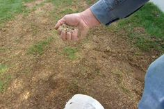 Breathe new life into a dead lawn with these tips from TOH landscape contractor Roger Cook. | thisoldhouse.com