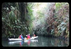 Enjoy an unforgettable adventure that offers something special for the whole family when you join us on this glowworm kayak trip! Private boutique upgrades are available! Kayak Equipment, Boat Shed, Restaurant Deals, Kayak Adventures, Before Sunset, Lake View, Paddle Boarding, Kayaking, New Zealand