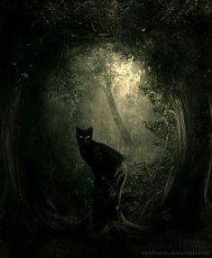 Black cat in the dark forest Wallpaper Gatos, Black Cat Art, Black Cats, Arte Obscura, Witch Cat, Warrior Cats, Gothic Art, Halloween Cat, Cat Love