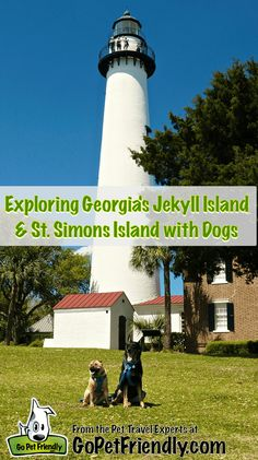 Exploring Georgia's Jeckyll Island and St. Simons Island with Dogs from the Pet… St Simons Island Georgia, Jekyll Island Georgia, Georgia Beaches, Dog Friendly Hotels, All I Ever Wanted, Dog Travel, Dog Friends, Savannah Chat, Savanna Georgia