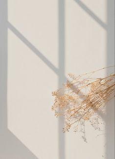 Cute Patterns Wallpaper, Aesthetic Pastel Wallpaper, Aesthetic Backgrounds, Aesthetic Wallpapers, Beige Wallpaper, Windows Wallpaper, Blog Backgrounds, Cream Aesthetic, Flower Aesthetic