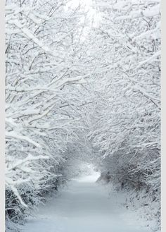 J'aime la neige ❄