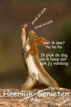 Pluk de dag Good Day, Good Night, Good Morning, Animals And Pets, Funny Animals, Cute Animals, Months In A Year, Morning Quotes, Friendship Quotes