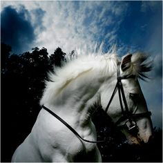 Welcome to my blog. It's here to celebrate horses and all their magnificence. I post pictures,...