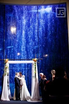 Wedding At The Aquarium Of Pacific