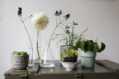 Urban Jungle Bloggers: Plants & Flowers by @juudje