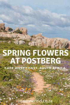 Spring flowers at Postberg in the West Coast National Park Africa Cape Town Tourism, Slow Travel, Travel Tips, Provinces Of South Africa, West Coast Road Trip, Africa Travel, Travel Around, Spring Flowers, Places To Travel