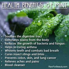 Health Benefits of Mint #mint #herbs #health