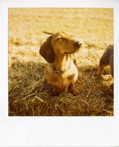 Dachshund                                                       My first best friend was a dachshund & turned me into the animal freak I am today!!!