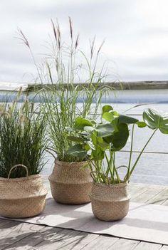 Grønne planter og prydgress er trendy i seagrasskurver med hank.