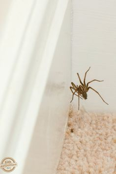 How To Keep Spiders Away From Your House
