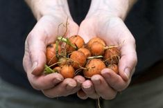 "From Chiot's Run - some tips for growing carrots, plus a REALLY cool ""square foot gardening"" tool they made."