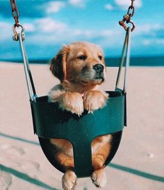 Baby Animals Pictures, Cute Animal Photos, Puppy Pictures, Animals And Pets, Baby Animals Super Cute, Cute Little Animals, Cute Funny Animals, Funny Dogs, Cute Little Puppies