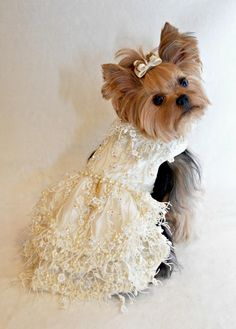 Millie LaRue in Chien Couture