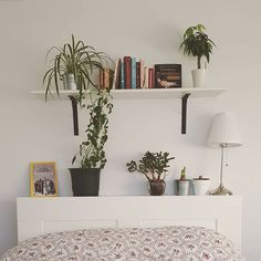 Florence Mercier St-P. St P, Bedroom Plants, Florence, Shelves, Mood, Photo And Video, Instagram, Home Decor, World Animals