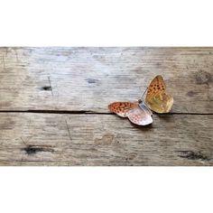 @5ftinf Instagram. Butterflies.