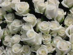 Fresh Cut White Roses