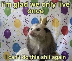 Dankest Memes, Funny Memes, Hilarious, I Cant Do This, Funny Comic Strips, Depression Memes, Opossum, Cheer Up, I Don T Know