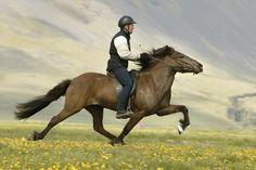 horse riding - Google Search