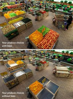 Your produce choices with bees, and without bees. Do what you can to help bees today. Plant clover, install a hive, support your local beekeeper...