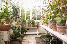 Glashouse Garden Living, Natural Garden, Close To Home, Glass House, Conservatory, Indoor Garden, Garden Design, Green, Nature