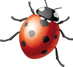 "Résultat de recherche d'images pour ""dessin coccinelle"" Bicycle Helmet, Images, Crochet, Hats, Ladybugs, Insects, Searching, Hairstyle, Crochet Hooks"