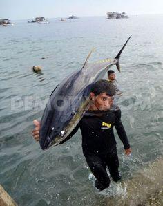 Philippine Tuna Industry still catching the vulnerable Big Eye