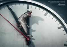 Every 60 seconds a species dies out..