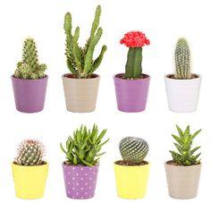 DIY CACTUS. Les cactus c'est tendance mais vous n'avez pas la main verte. Pas de problème, cette sélection DIY propose des modèles de cactus artificiels à faire soi-même, en carton, papier, feutrine, en galets, au crochet. Garantis sans entretien et sans épine.