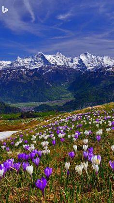 Frühling in den Bergen Beautiful World, Beautiful Gardens, Beautiful Flowers, Beautiful Landscape Pictures, Beautiful Landscapes, Landscape Photography, Nature Photography, Scenery Pictures, Natural Scenery