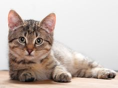 Cats get a reputation for being aloof and inscrutable, and of course some are, but most of them are telling you things all the time. It's just that they aren't saying it with their voices.