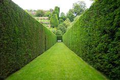 Garduri vii cu crestere rapida - 5 plante pentru intimitatea voastra
