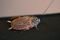 Only in Australia are the cockroaches this drop dead gorgeous. Weird Insects, Cool Insects, Bugs And Insects, Spider Species, Insect Photos, Roaches, German Cockroach, Beautiful Creatures, Animals And Pets
