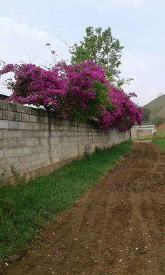 Caminhando e descobrindo o colorido da periferia.